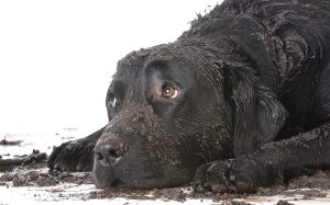Muddy Dog - How To Keep Your Home Clean With Furry Friends
